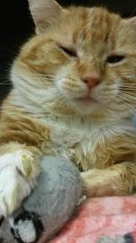 Pet Vaccines - Abiqua Animal Clinic